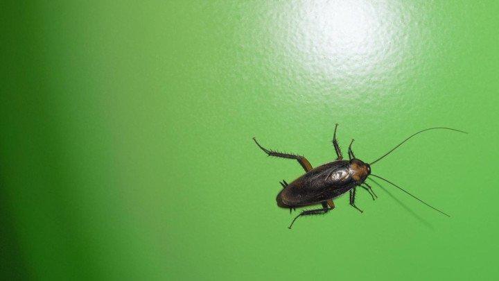 Дезинсекция тараканов